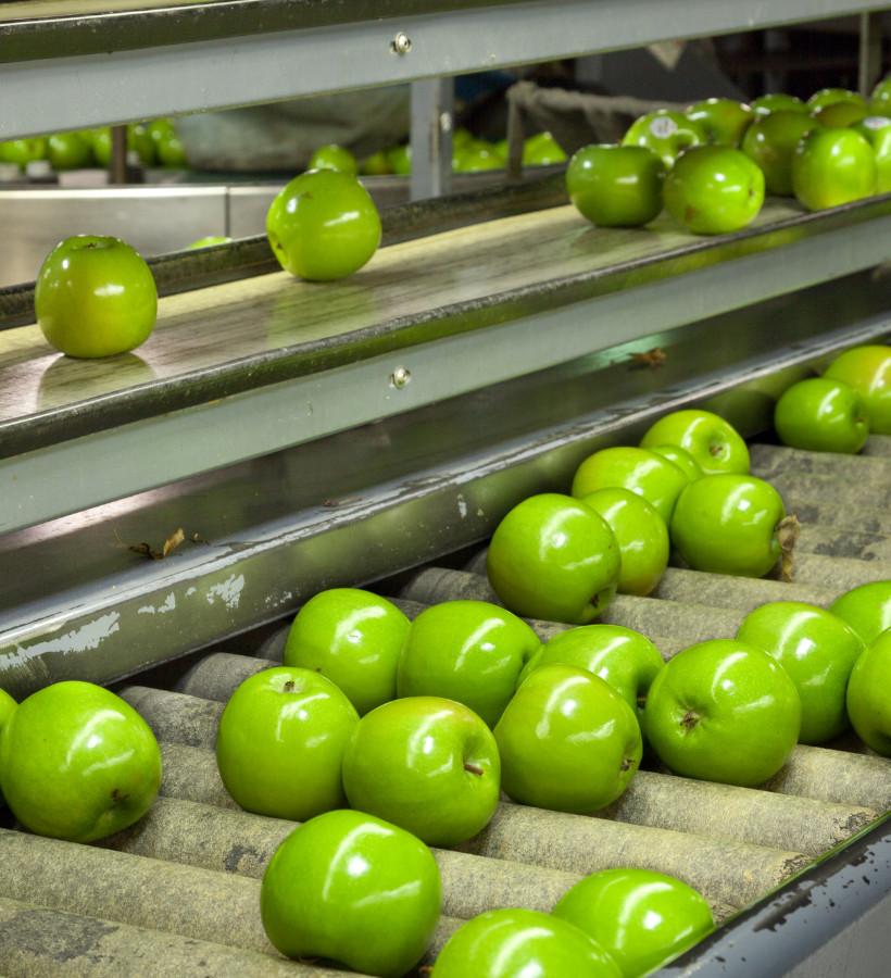 Apple packhouse