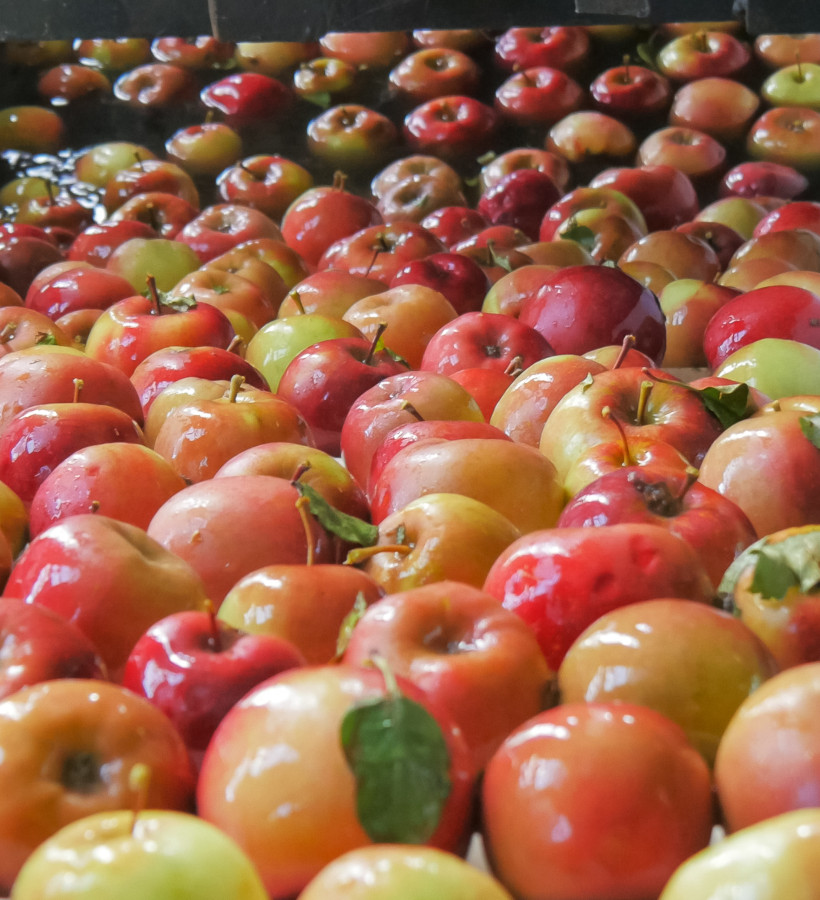Packing apples
